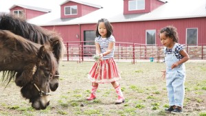 Badlands Ranch - Feeding The Donkeys