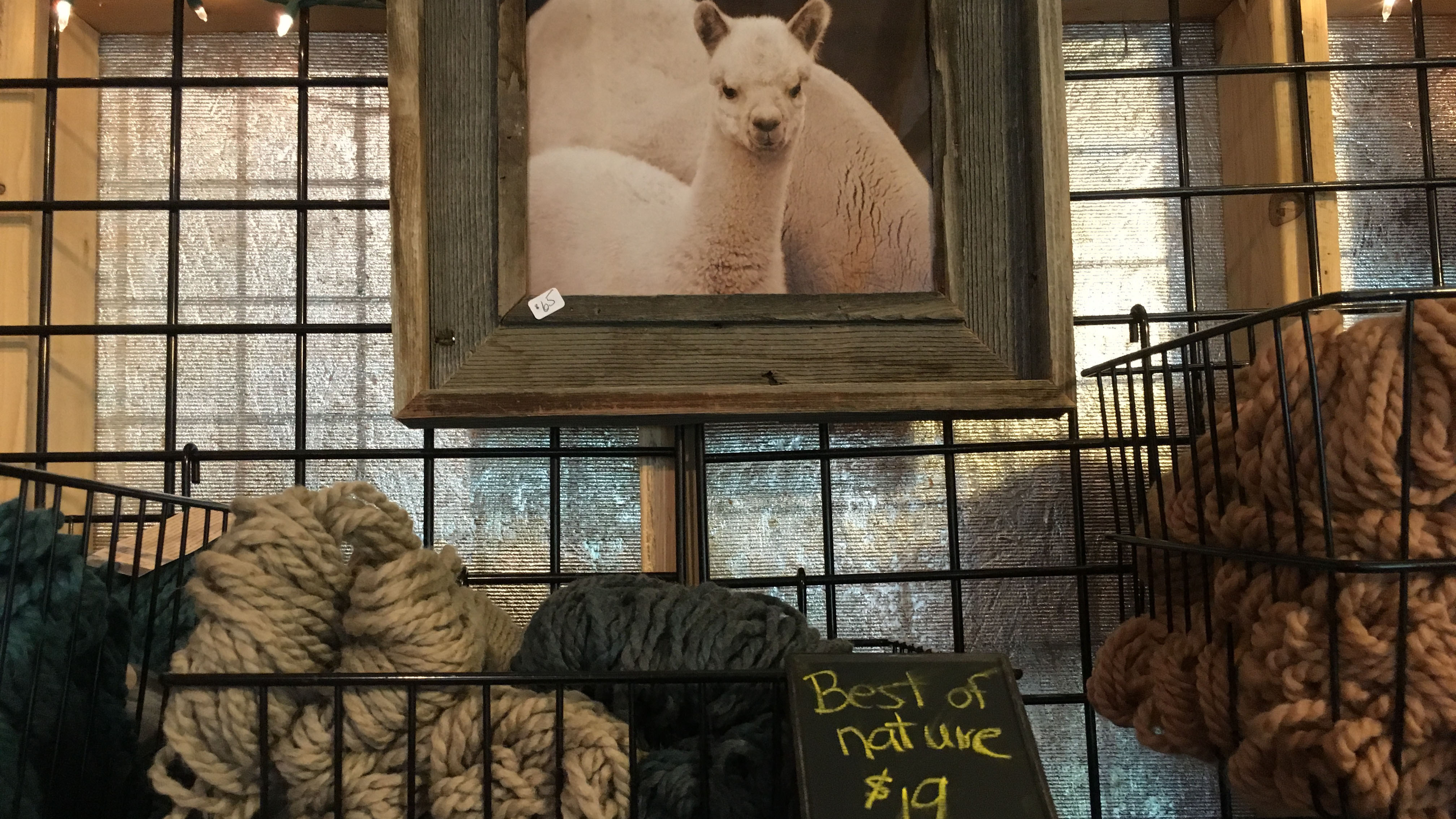 The alpacas are never far from mind on Blue Moon Ranch.