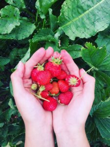 Perfect summer strawberries from Badlands Ranch.
