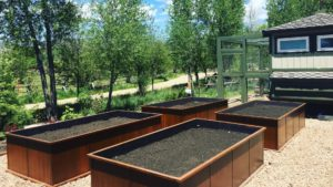 Our new raised beds ready for planting!