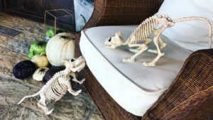 Cat and dog skeletons, pumpkins, spiders and skulls