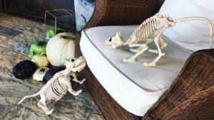 Cat and dog skeletons, pumpkins, spiders and skulls