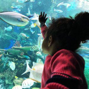 Adalaide at Ripley's Aquarium of Canada