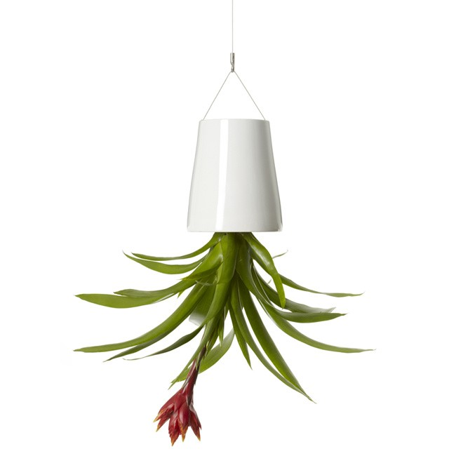 Boskke Hanging Ceramic Planter