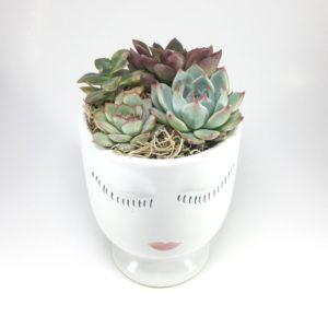 Beauty Face (Celfie) Succulent Arrangement