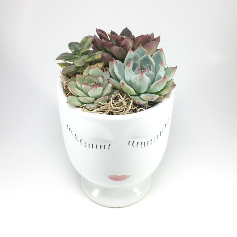 Beauty Face (Celfie) Succulent Arrangement